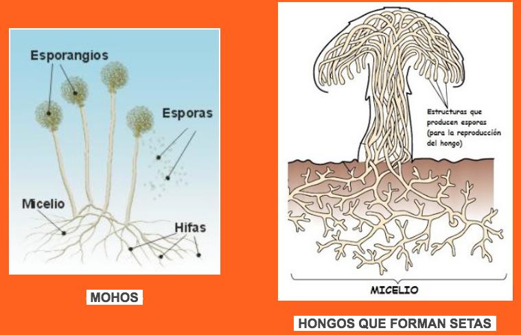 Un reino muy variado | Microorganismos, los seres vivos más