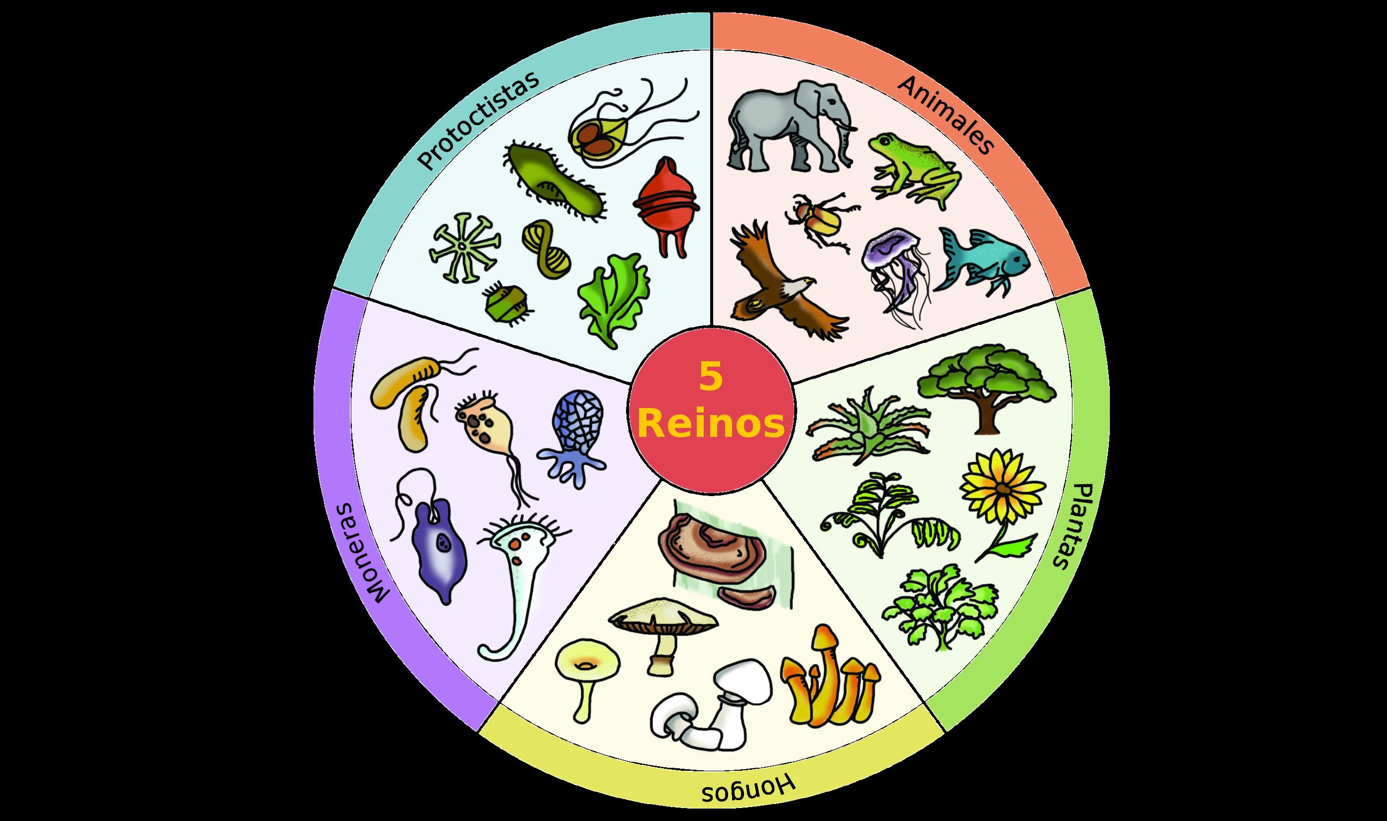 El Reino Animal Vertebrados Los Animales Más Evolucionados